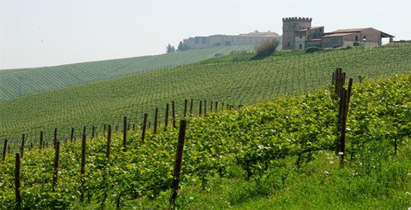 Perle dell'Oltrepo Pavese: Bisi Azienda Agricola